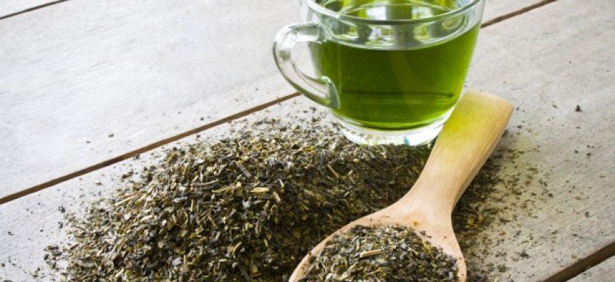 הידעת? התה הירוק מגן על תאי המוח מפני מחלת פרקינסון ואלצהיימר