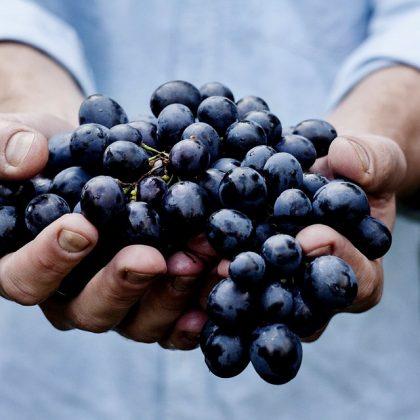 מיץ ענבים מזנים כהים והסגולות המדהימות שלו!