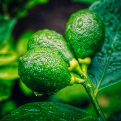 לימון וכורכום כמונעי מחלת הסרטן